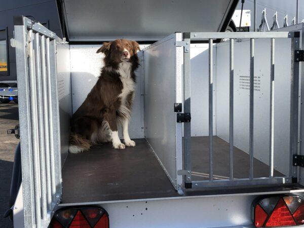 TPV Hundeanhänger, geschlossener Kastenanhänger, Einachser, leichter Anhänger, Anhänger für Hundetransport, für 2 oder 3 Hunde, Check Trailers 9
