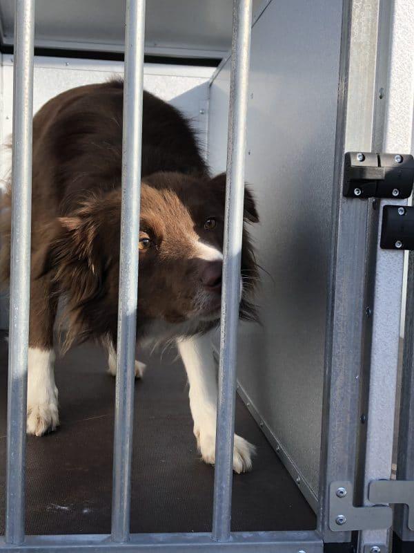 TPV Hundeanhänger, geschlossener Kastenanhänger, Einachser, leichter Anhänger, Anhänger für Hundetransport, für 2 oder 3 Hunde, Check Trailers 12